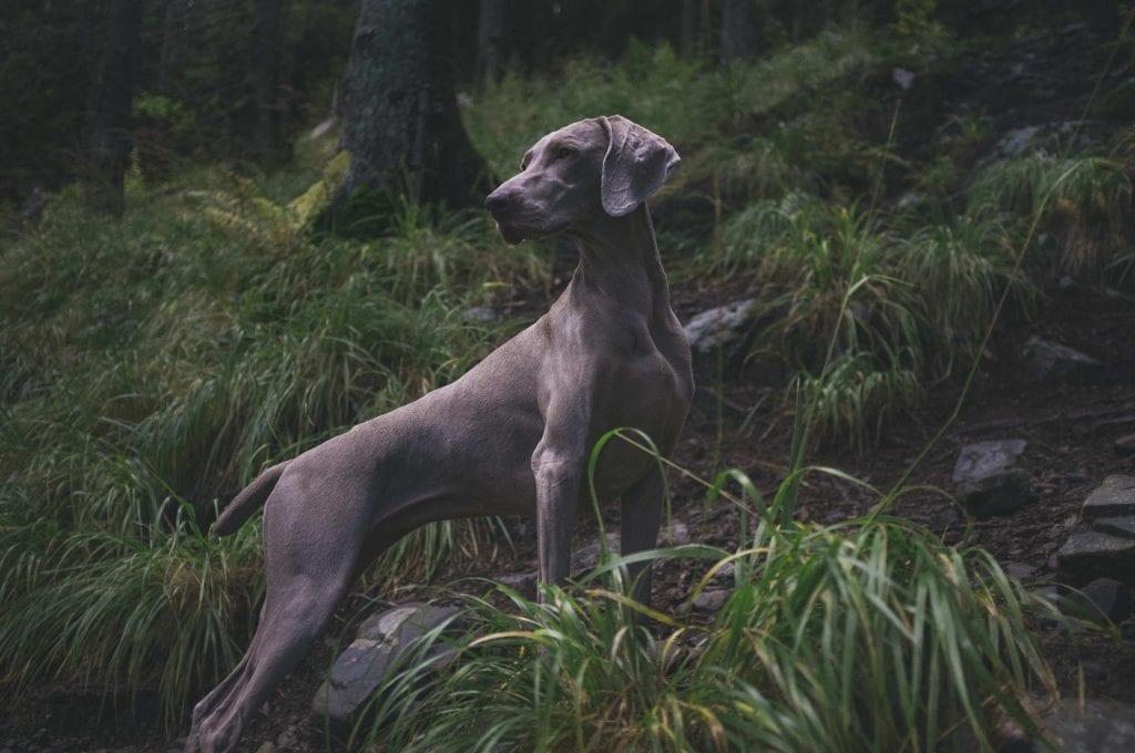 dog with glossy coat