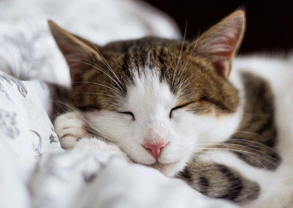 Cat purring while sleeping