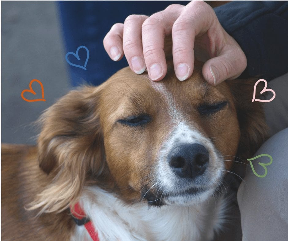 Dog being stroked on it's head