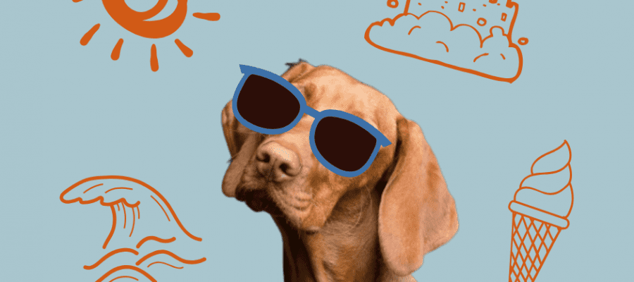 Dog with sunglasses on