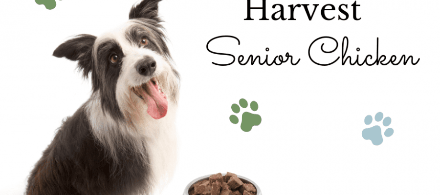 mature dog sitting next to dog bowl full of Nature's Harvest Senior Chicken