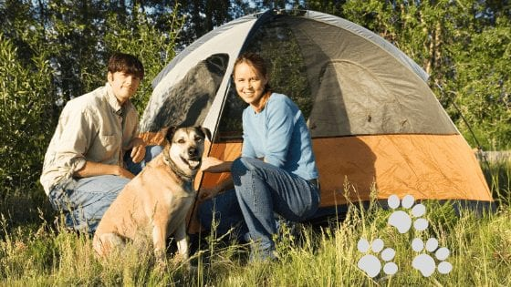 June is National Camping Month - Camping With Your Dog