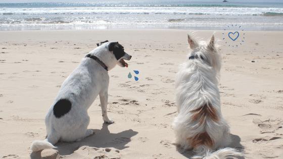 Life's a Beach 1