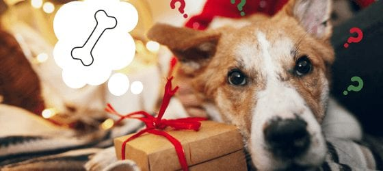Christmas Gift Guide for your Dog 2